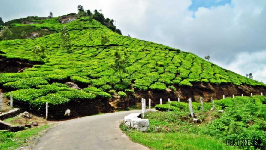 Kerala (5 Days Kochi -Munnar - Thekkady - Allepey)