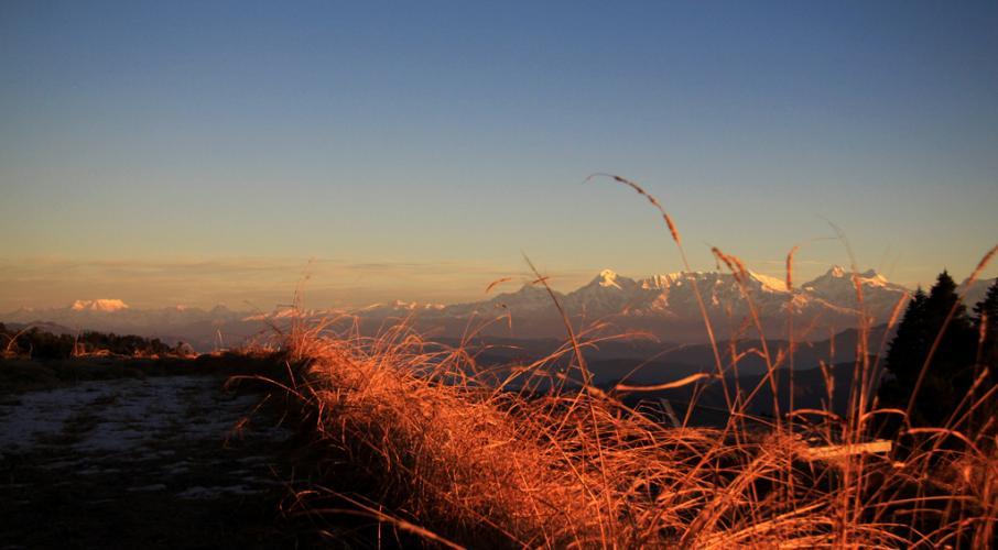 Holi-With Colors Of Nature @Mukteshwar