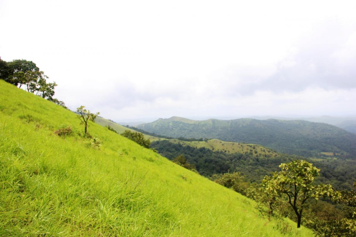 Kodachadri Trek & Hidlumane Falls