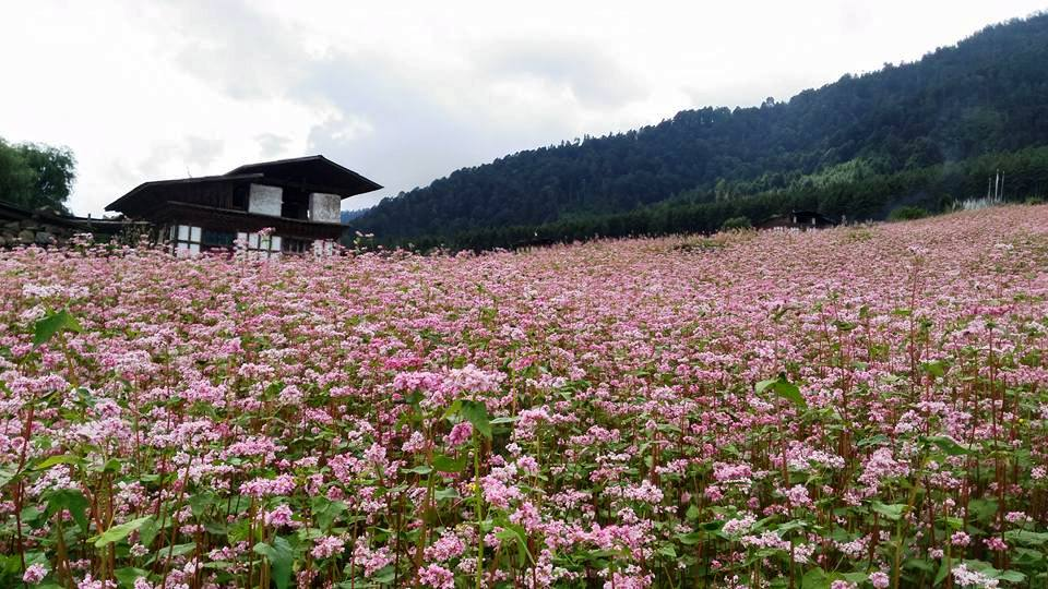 Happiness Trip to BHUTAN