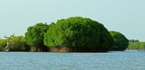Mangrove Forest and Wood Fossil Trip