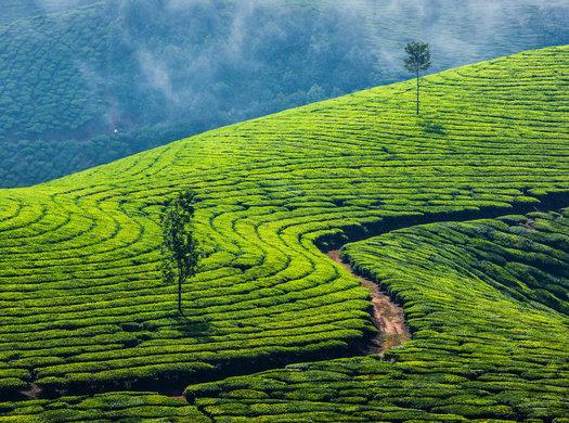 Backpacker's Kerala Tour